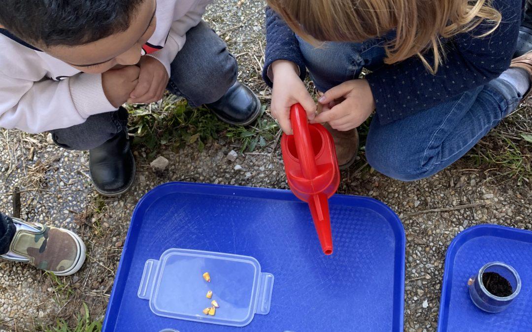La classe de tps-ps-ms a planté quelques graines pour le printemps